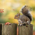 Autumn squirrel by Lyn Evans