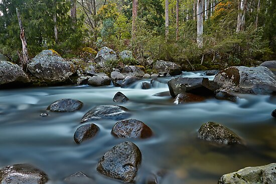 The River Wild by Mark  Lucey