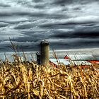 Over the corn field  by carlosramos