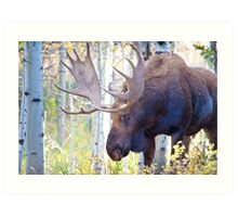 Sad Ending For A Stunning Bull Moose Art Print