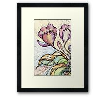 Crocus.Hand drawn watercolor and ink drawing Framed Print