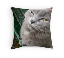 Skeptical Kitty Throw Pillow