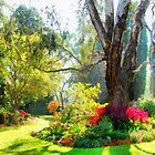 Garden sunlight 2 by Fran Woods