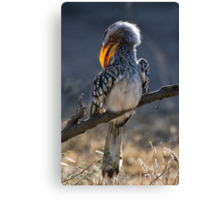 Yellow Grooming Canvas Print
