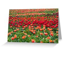 Sea of colourful tulips Greeting Card