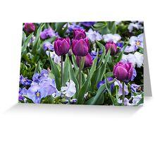 Purple tulips in a sea of pansies Greeting Card