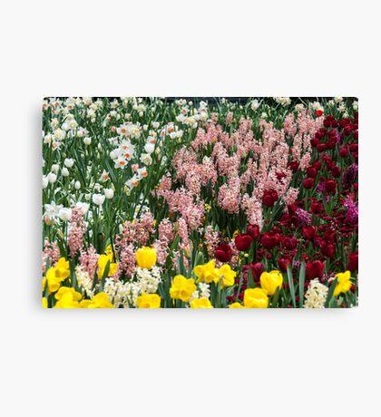 Colourful garden bed Canvas Print