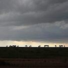 Wild Horses by hellomrdave