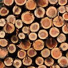 Logs by hellomrdave