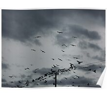 The birds, clouds and telephone lines Poster