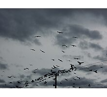 The birds, clouds and telephone lines Photographic Print