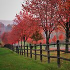 Ohio country roads in autumn  by woodnimages