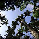 Sanya trees, China by Chris Millar