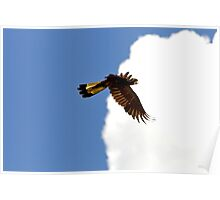 Yellow-Tailed  Black-Cockatoo  2 Poster
