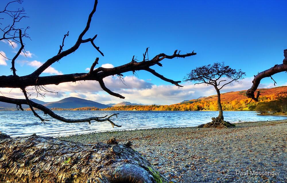 Lone  Loch Lomond Tree by Paul Messenger