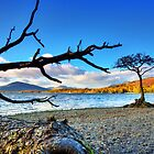 Lone  Loch Lomond Tree by Paul Messenger