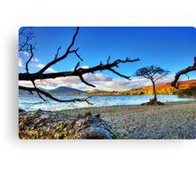 Lone  Loch Lomond Tree Canvas Print