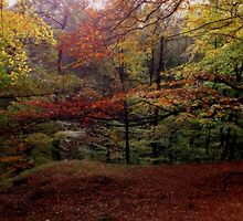 Autumn colour's by shelleybabe2
