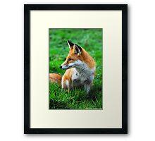 fox 3 Framed Print