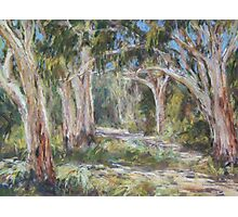 Lake Innes Nature Reserve 2 - plein air Photographic Print