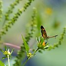 Butterfly in the Garden by Robin Lee