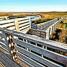 Marshes of Bodie Island by Robin Black