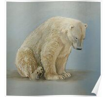 Polar bear sitting Poster