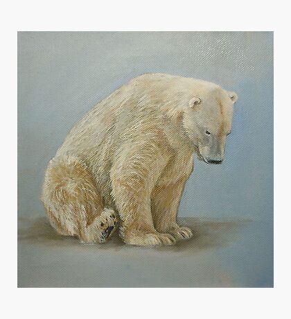 Polar bear sitting Photographic Print