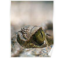 Crocodile's Eye Poster
