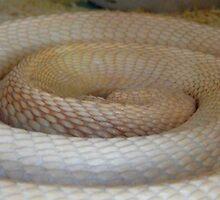 Coils Of The Sleeping Cobra by WildestArt