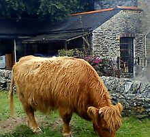 Highland Cow by IamJane--