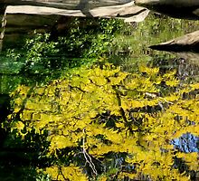 At the Zoo - Reflection  by Sally Haldane