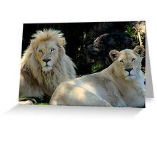 At the Zoo - A Quick Glance Greeting Card