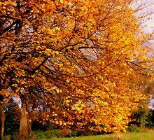 Autumn Scene by shelleybabe2