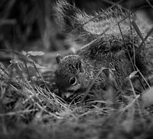 Foraging Squirrel by Sevenhills
