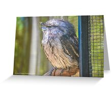 Brand New Photography Greeting Card