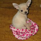 The worlds cutest Chihuahua by pinkyboy