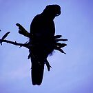 Cockie Silhouette.. by debsphotos