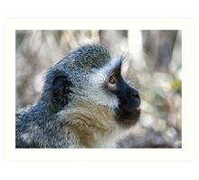 Vervet Profile Art Print