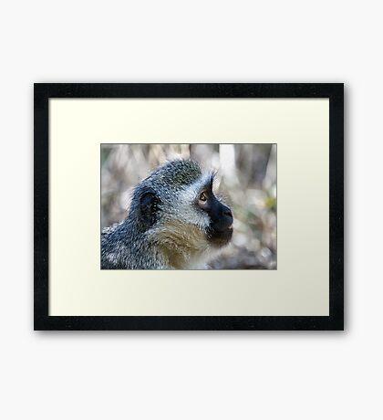 Vervet Profile Framed Print