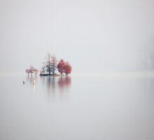 Stillness, Jordan Lake, NC by Denise Worden