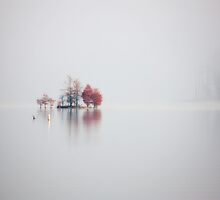 Stillness, Jordan Lake, NC by Denise Worden