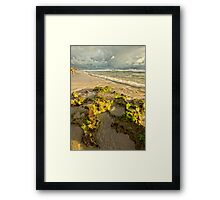 Moss on the Rocks Framed Print