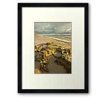 Moss on the Rocks Framed Print