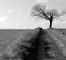 Solitude by Simon Brown