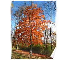 Flaming Maple Poster