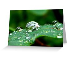 Droplets on a Leaf Greeting Card