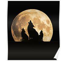 Coyote Trio   Poster