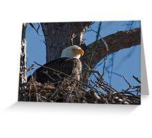 Nesting Parent, Bald Eagle, Jordan Lake, NC Greeting Card