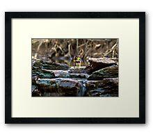 Cross the streams Framed Print